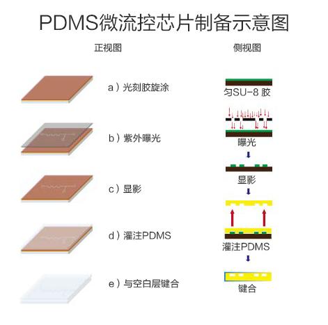 PDMS芯片制备图3.jpg