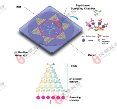 微流控浓度梯度芯片在高通量药物筛选领域应用
