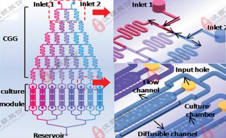 微流控浓度梯度芯片在化学因子毒性评价领域应用