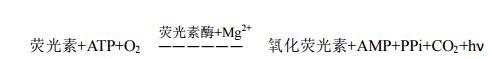 ATP荧光检测作用机理