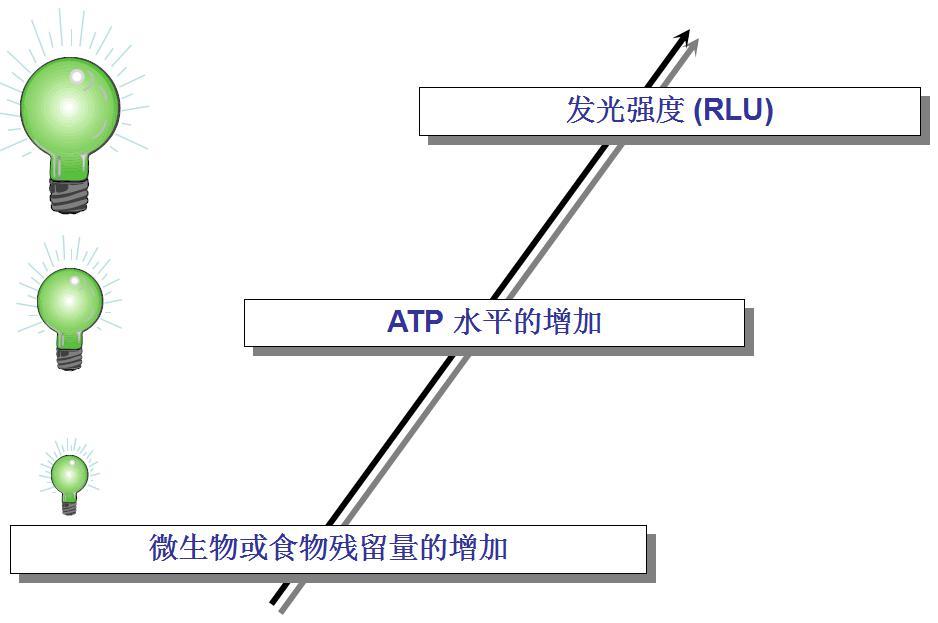5.ATP与食物和微生物的关系