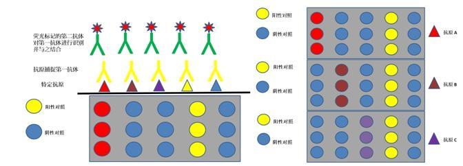 微流控芯片原理