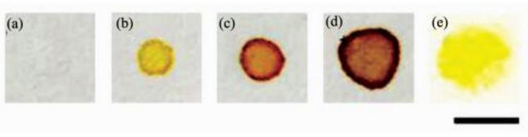在全氟辛基二氧化硅(a~d)和甲基二氧化硅(e)修饰的疏水表面上进行细菌检测(a)E.coli +破膜剂, 无CPRG;(b)E.coli + CPRG, 无破膜剂;(c)E.coli +破膜剂+ CPRG;(d)E.coli(2倍用量)+破膜剂(2倍用量) + CPRG;(e)E.coli +破膜剂+ CPRG(标尺=5 mm)