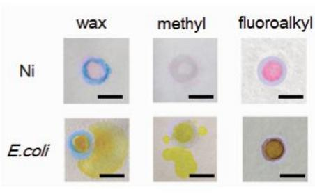分别利用三种隔离图案进行Ni(Ⅱ)离子和细菌检测