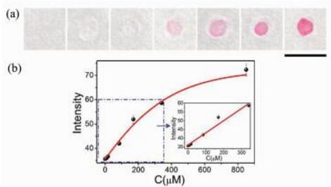 Ni(Ⅱ)离子的定性可视化检测(a)及定量分析(b)