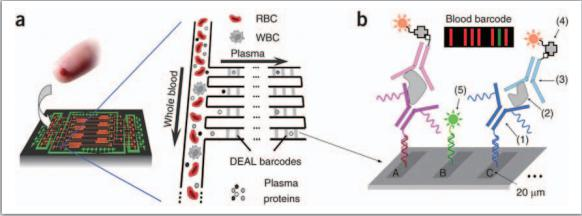 整合式微流控芯片可进行血球血浆分离及细胞激素之检测
