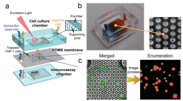 多孔洞结微过滤薄膜之微流控芯片 (a) 流流控芯片示意图 (b) 实际微流控芯片照片及使用电子扫描显微镜(SEM)所拍摄之微过滤薄膜孔径图 (c) 使用分析软体进行细胞计数示意图