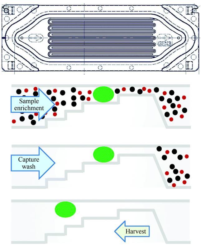 一次性Parsortix盒整体及截面结构示意图
