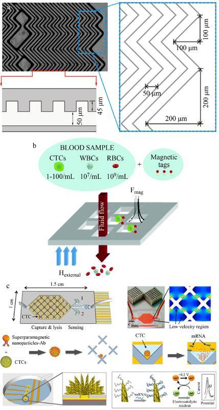 CTCs亲和分选装置(a)鱼骨结构微漩涡发生器、(b)抗体标记的磁性粒子捕获CTCs及(c)速度谷分选芯片、电化学裂解电极、纳米结构传感器的示意图