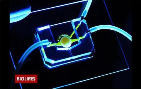 拥有微流控通道(黄色)的眼睛芯片,能够将营养物质带给位于圆形支架中心的细胞。该团队还开发了一个微工程眼睑,能够在芯片上模拟眨眼