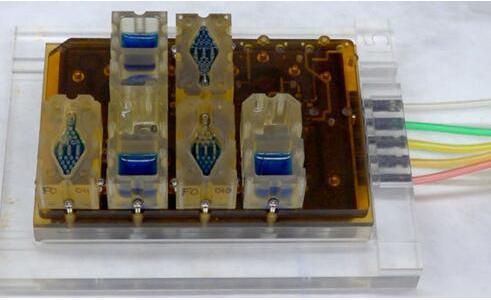 EVATAR是一款口袋大小的女性生殖系统模型,血样流体(蓝色)将流经含有微型器官的孔