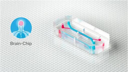 Emulate的器官芯片,如大脑芯片,包含排列成千上万活的人体细胞和组织的微小中空通道,每个都有大约AA电池(5号电池)大小