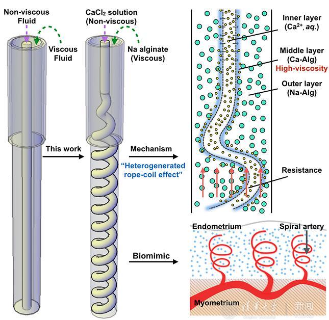 含螺旋血管通道的水凝胶纤维制备技术上取得新进展