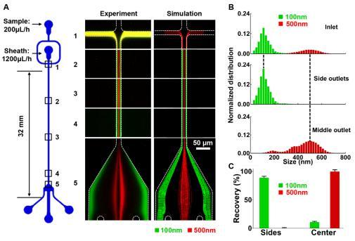 微流控芯片的结构示意图及不同尺度纳米颗粒分离的实验观测与数值模拟对比