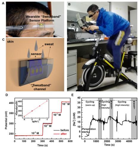"""图2.(A)、(B)和(C)为可穿戴""""导汗带""""汗液传感器设备的照片和示意图;(D)汗液传感器芯片在穿戴前和穿戴后对不同浓度标准Na+溶液的校准曲线;(E)为汗液传感器在人体上运动过程中实时连续监测汗液中Na+浓度变化的曲线图。"""