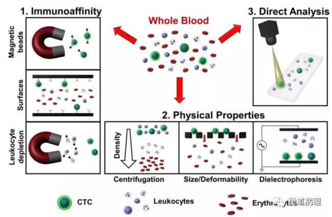 从全血中分离CTC的方法