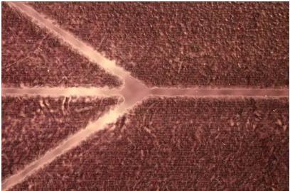 喷涂在透明聚合物材料上的蜡层(充当紫外曝光制作微流控芯片的掩膜板)