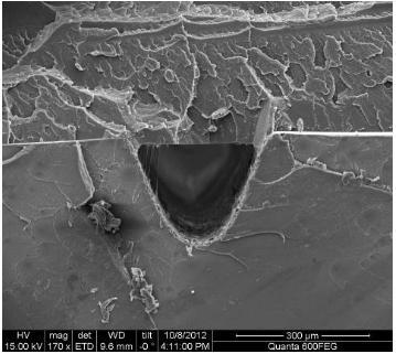 热压键合后的热塑性材质微流控芯片横截面(PMMA-PS材质)