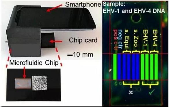 微流控芯片实验室平台:可快速检测多种传染病病原体