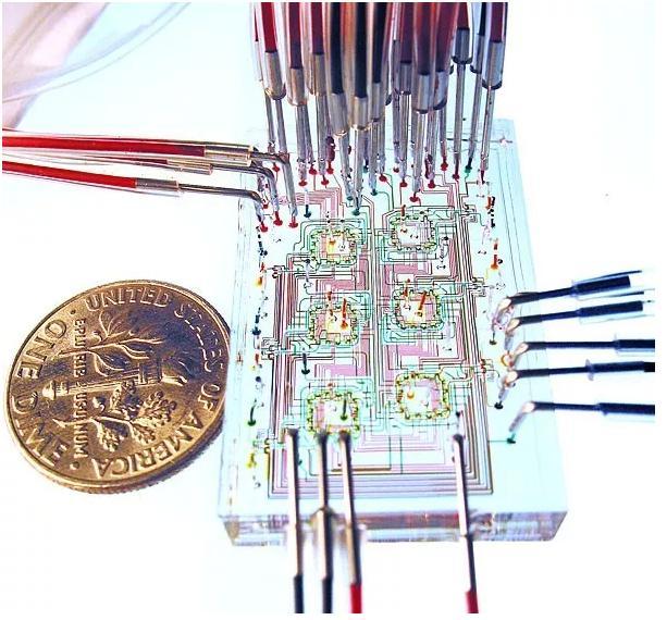 微流控器官芯片