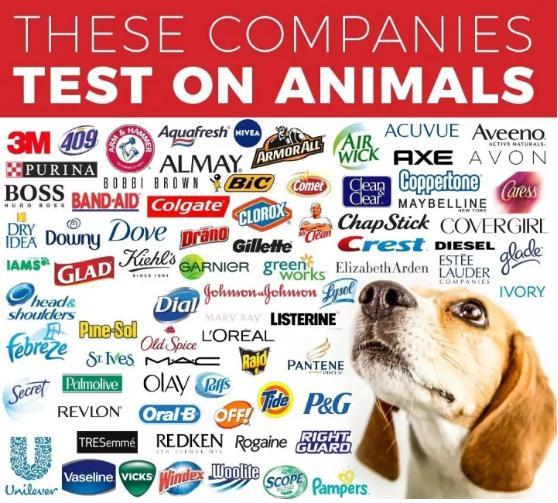 全球药物研发在动物身上测试图