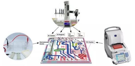 PCR反应,DNA电泳在芯片上的整合