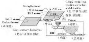 图 2 微芯片上西维因的检测