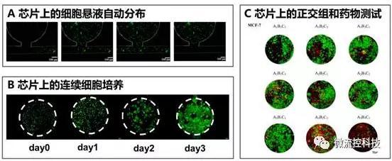 微流控芯片上的细胞悬液自动分布(A),连续细胞培养后仿真肿瘤组织形成(B)以及基于组织阵列的抗肿瘤药物正交组合测试(C)