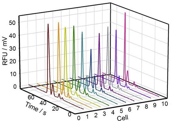 图2. 10组单个PC-12细胞内Na+、K+、Mg2+、Ca2+的电泳谱图