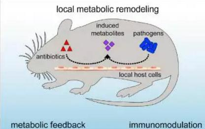 抗生素可不通过菌群削弱自身效果并改变宿主免疫功能