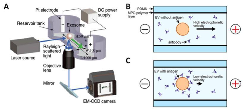 与激光暗视野显微镜集成的毛细管电泳(μCE系统)芯片的示意图