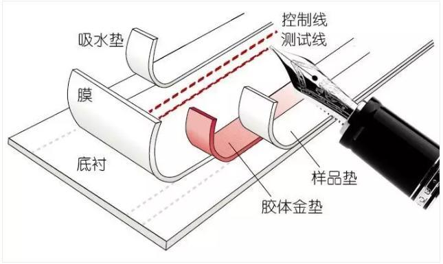 图2免疫层析产品的制造过程