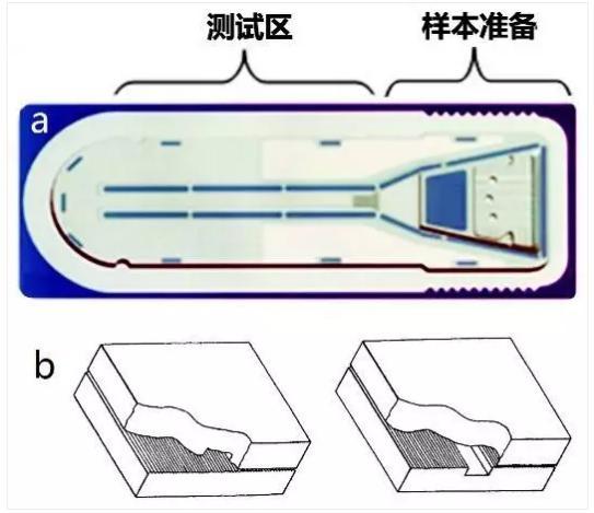 图3 Biosite微流体测试卡结构