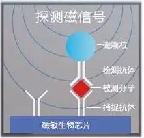 图6 理邦m16磁敏生物芯片检测原理