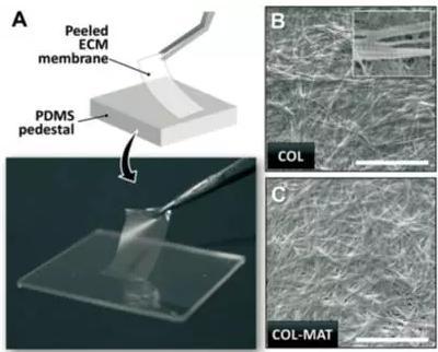 ECM薄膜的肉眼观察和表面微观结构图片
