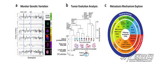检测肿瘤进展期间临床相关的基因变异