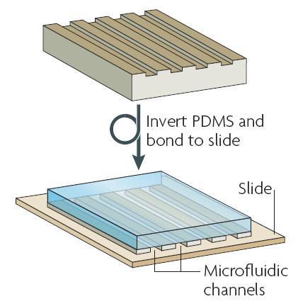 图2 微流控芯片的加工:集成微通道的PDMS层被密封在玻璃片上