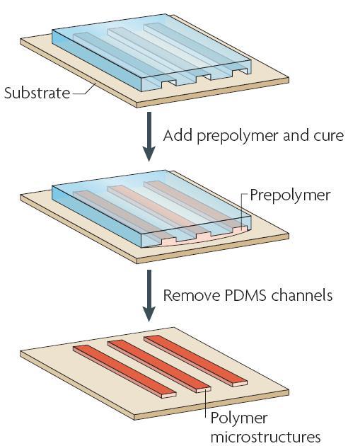 图4 毛细管成形技术的过程