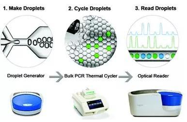 数字PCR