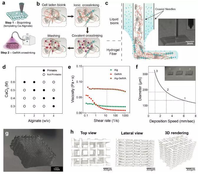 微流控3D组织结构