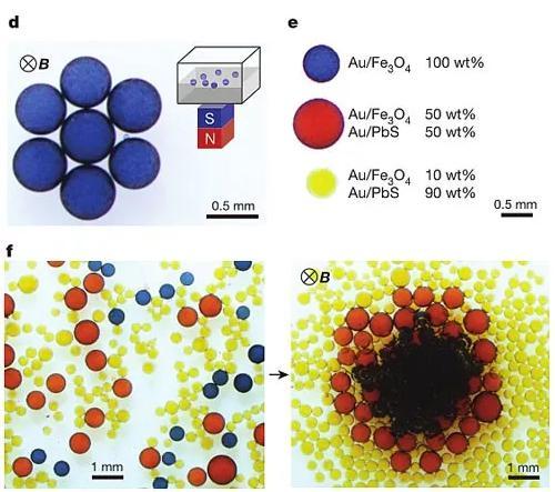 图2. 液滴对外加磁场的响应。图片来源:Nature