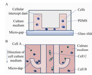 图 2 芯片结构示意图