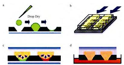 图1质粒转化过程