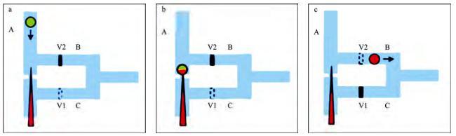 图2微流控芯片中的单细胞微注射系统