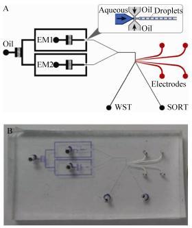 图2微流控芯片设计示意图(A)及实物图(B)