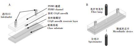 图 3 基于 PDMS 材质的可穿戴式的汗液 pH 检测芯片