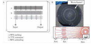 图2 蛇形通道型 PCR芯片:(A) 平行通道 PCR芯片,(B) 辐射通道 PCR芯片
