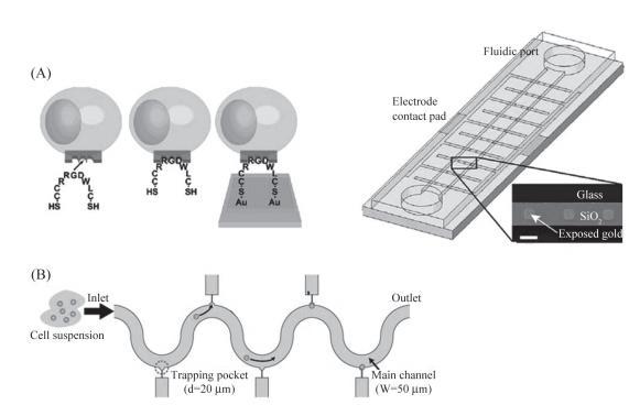 图6单细胞捕获示意图