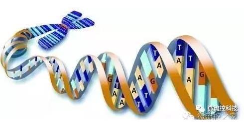 核酸分离与测序
