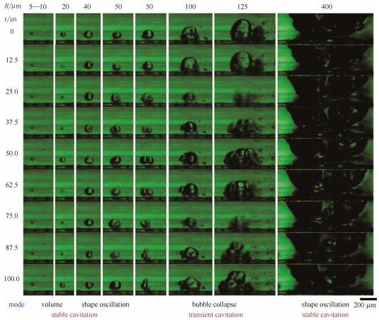 图5微通道中不同半径气泡的微观空化行为(每列的9张连续图片选自于拍摄帧速80000帧/秒、曝光12μs的视频。图片的时间间隔为12.5μs。图片底部标出了不同半径气泡的振荡模式)